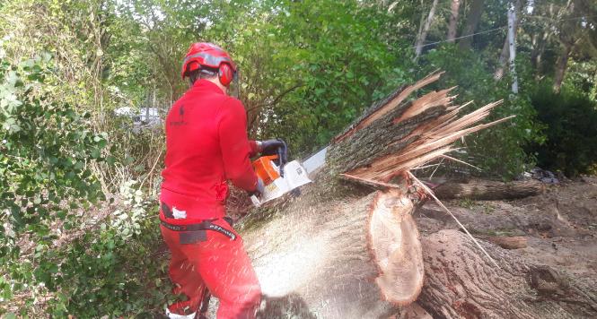 Baumfällung und Grünschnitt